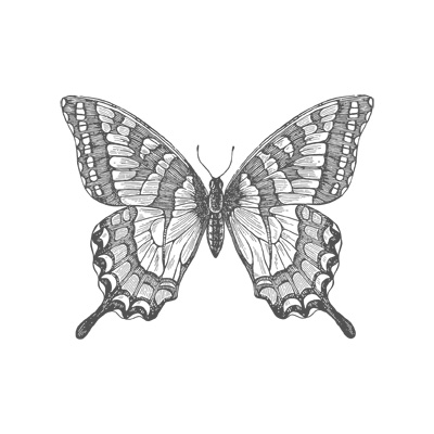 Swallowtail CM