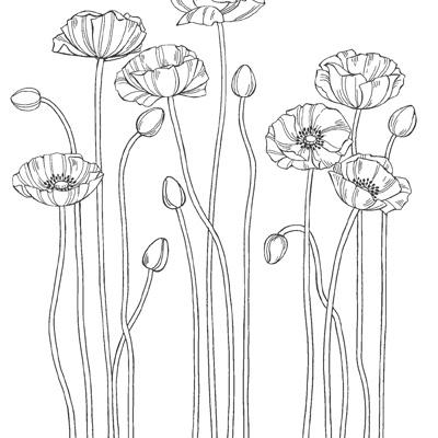 Pleasant Poppies CM Background