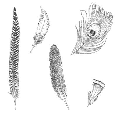 Fine Feathers CM